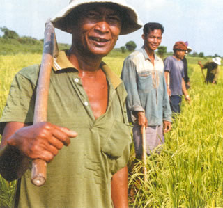 Rice Farmers in Cambodia