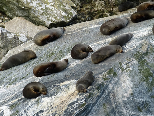Seals resting from climb