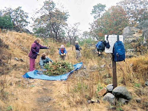 Senior Volunteer Vacations: Removal of Invasive Plants with The Land Conservancy