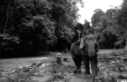 Elephant Ride in north of Chiang Mai