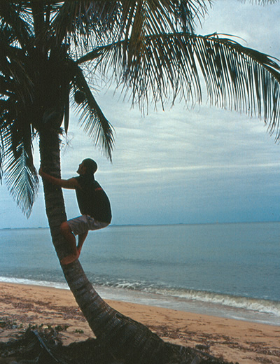 Author climbing coconut tree