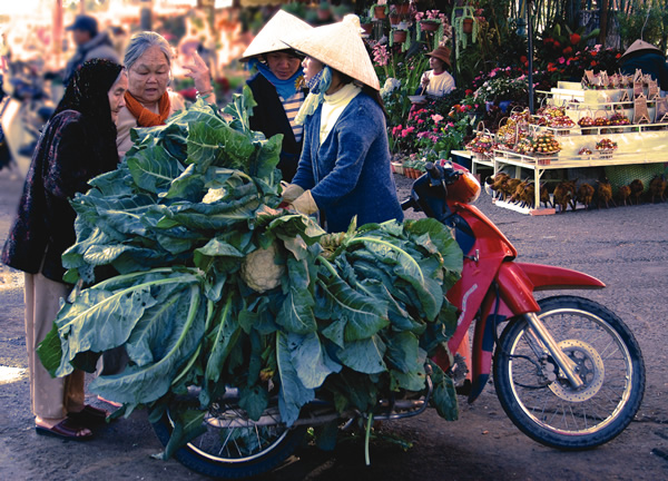 Local woman sells cauliflower in Dalat, Vietnam