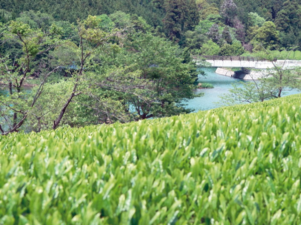 Japanese farm field and stream