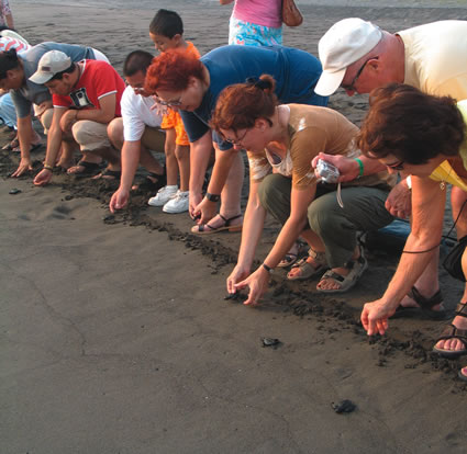 Volunteers with Sea Turtles in Mexico