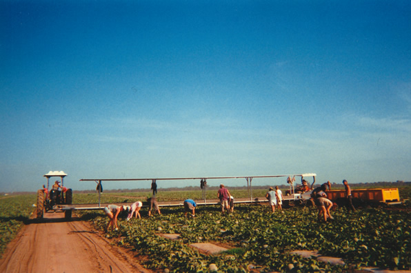 Farm Work in Australia