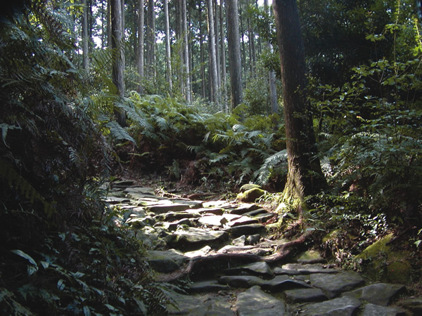 Magose Pass Road, Owase-shi on Kumano hike in Japan