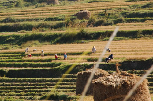 Agriculture in Bhutan