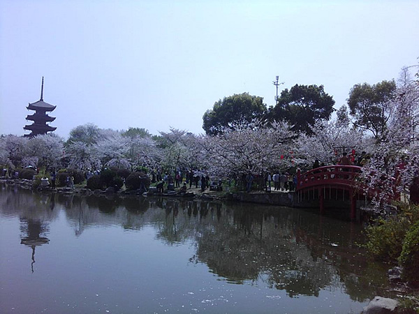 Wuhan, China Cherry Blossom Park