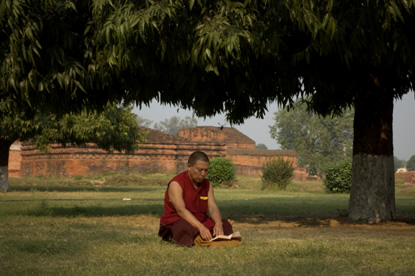 Monk reading under trees