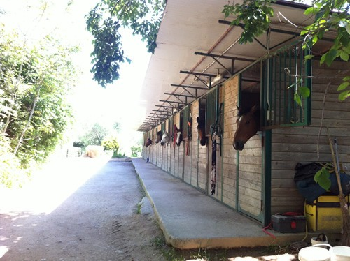 The horse stables at Umbrian vineyard