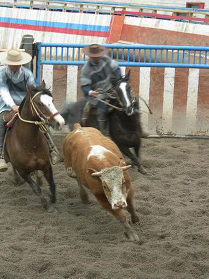 A rodeo in Chile